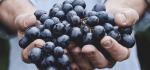 Натуральные вина — вина без make-up. Разве естественность — это плохо?